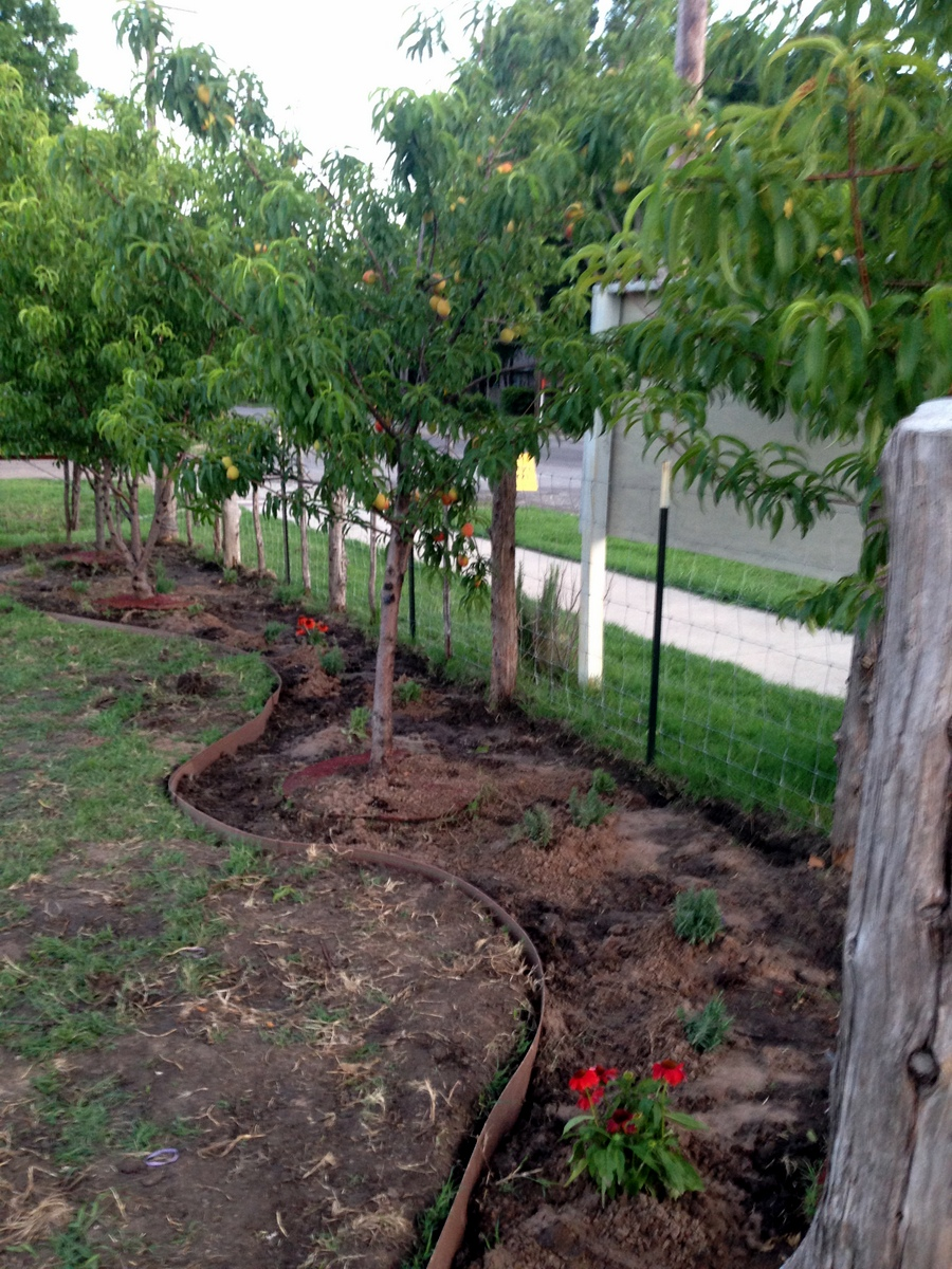 community garden update 5 13 2016 blooming grove texas u0027